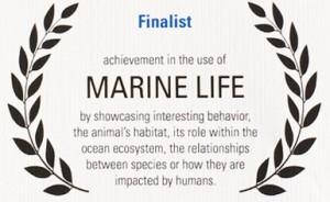 Finalist award BlueOcean